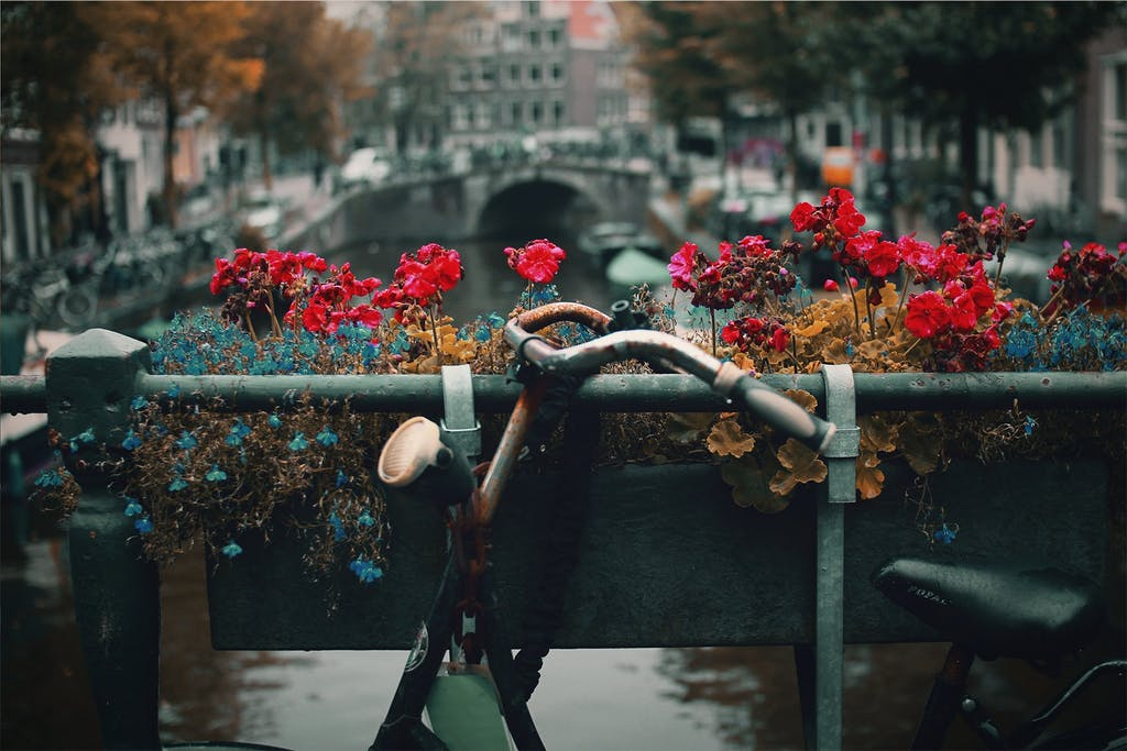 An old bike on a bridge with flowers in Amsterdam