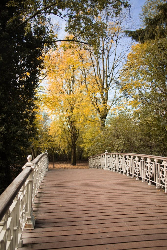 colourful trees in the autumn in a park next to a bridge in Amsterdam
