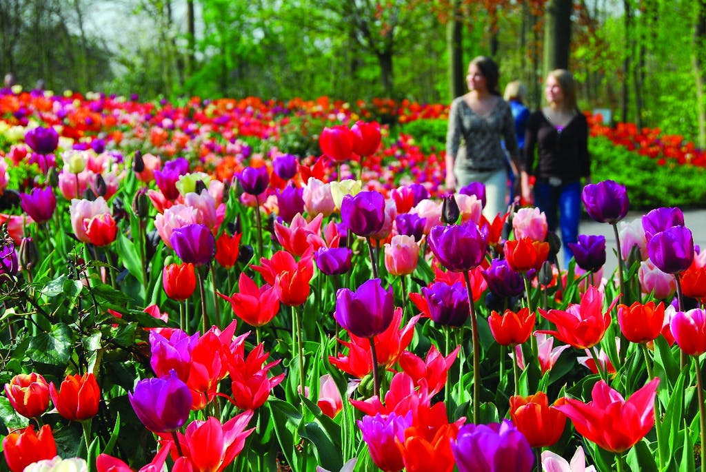 keukenhof flowers all over a day escursion from Amsterdam