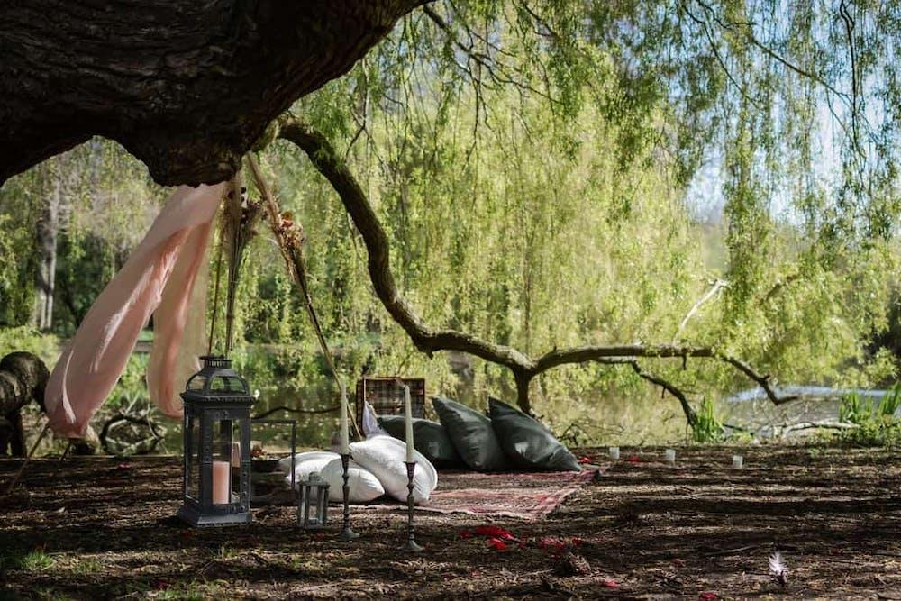 a close amsterdam picknick huwelijksaanzoekup of a tree