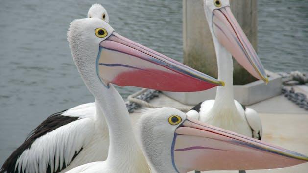 a pelican standing next to a bird