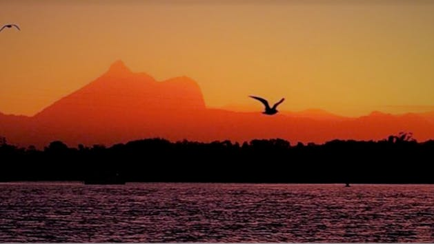 a bird flying over a body of water in front of a sunset