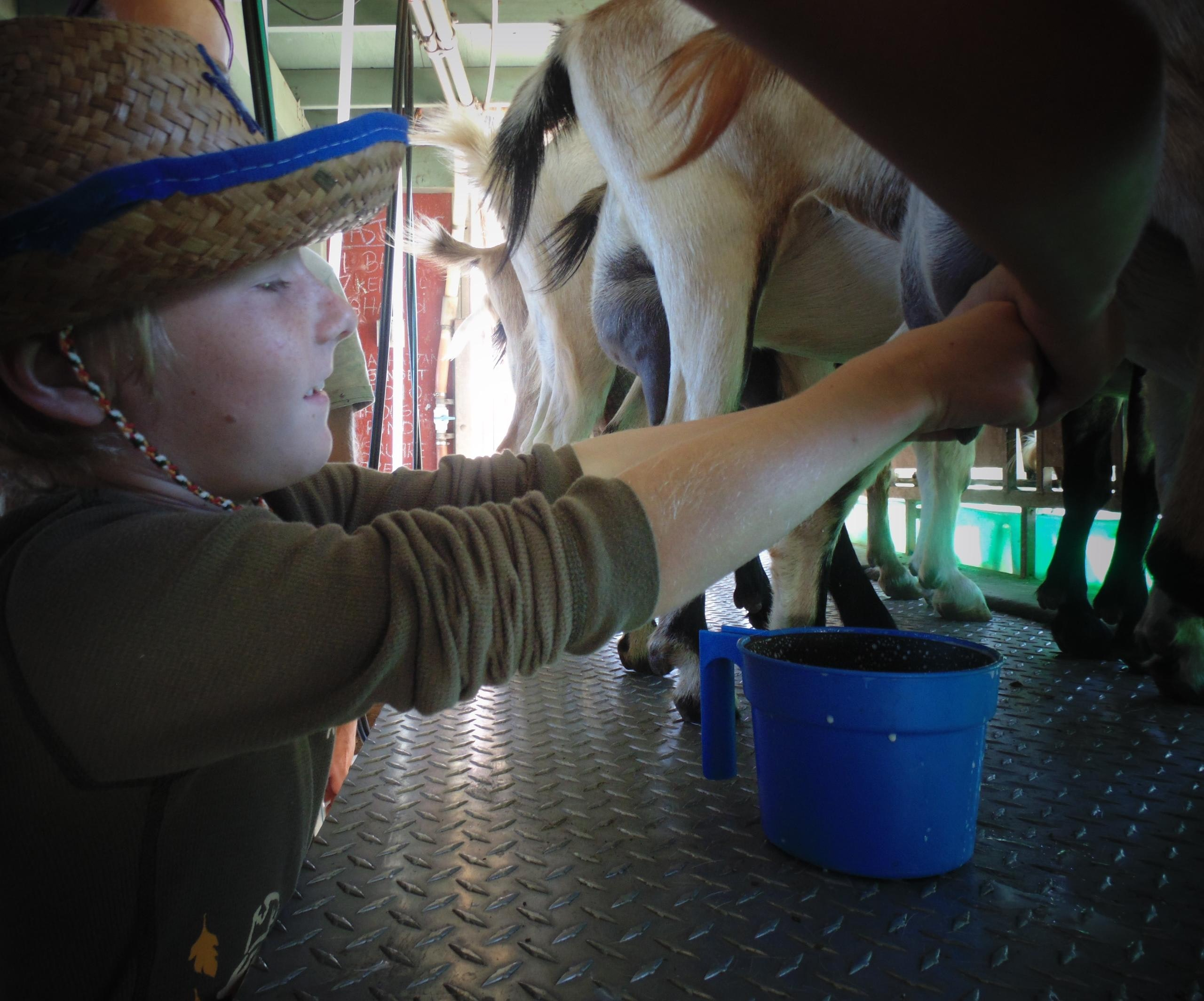 Mouth milking experience