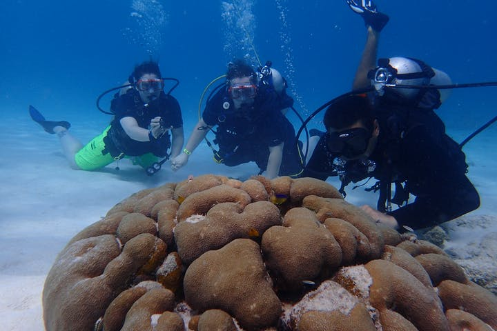 Divers inspecting a peculiar rock