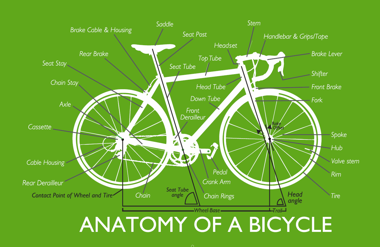 Bicycle Anatomy