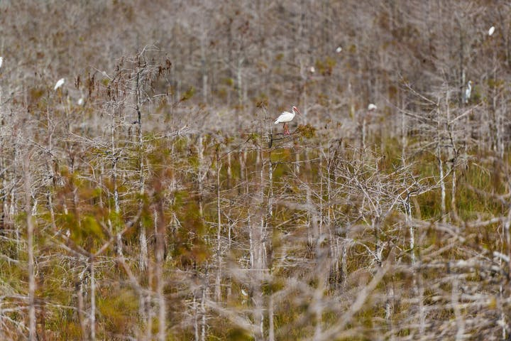 Self Driving Everglades Photography Guide