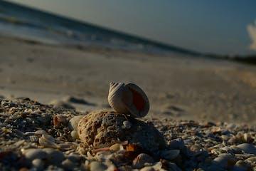 a bird standing on a rocky beach