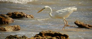 a close up of a bird on a beach near a body of water