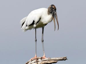 a bird standing on a branch