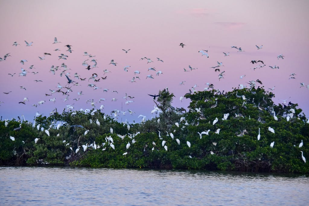 a flock of birds flying over a body of water