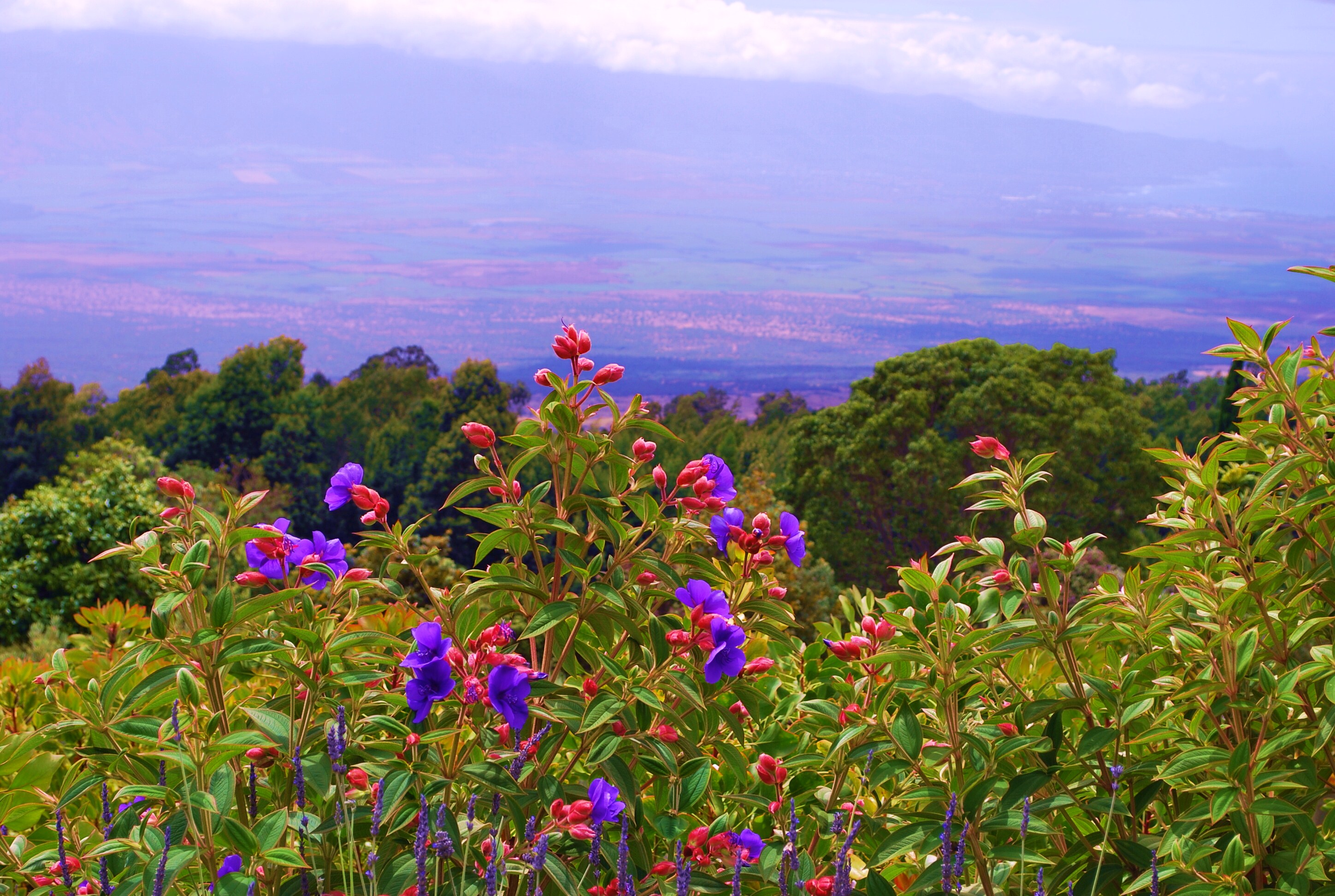 View from the Lavender Farm