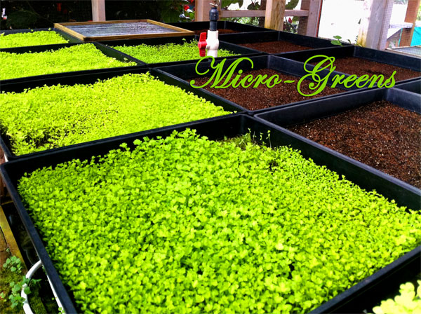 Aina Lani (MauiFresh Herbs)