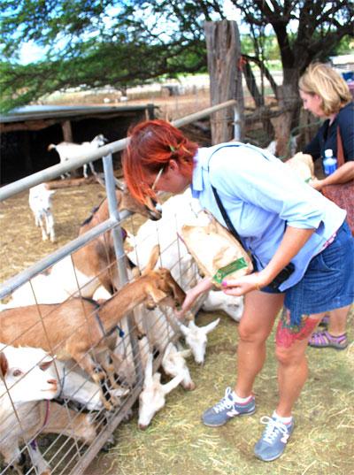 Feeding-the-goats