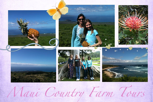 Maui Country Farm Tours postcard