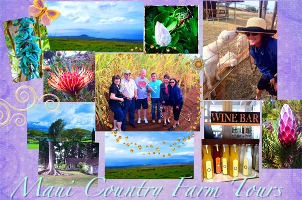 Maui Country Farm Tours with Maui Visitor's Bureau