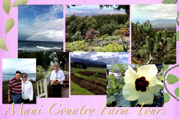 Maui Country Farm Tours Postcard