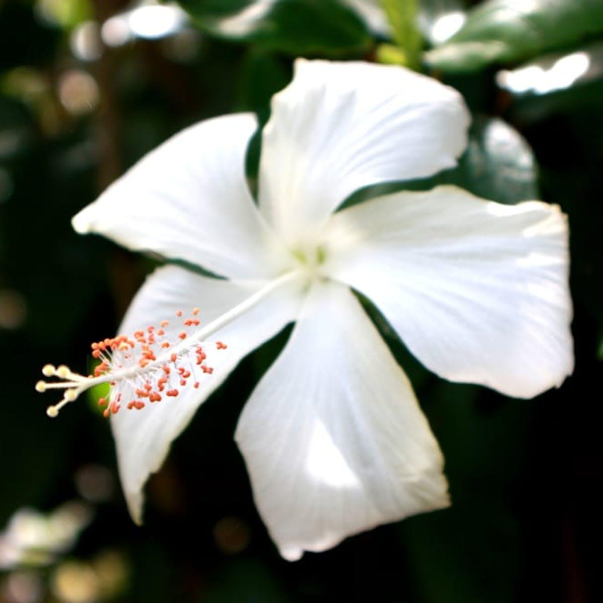 Flowers and foliage on Maui