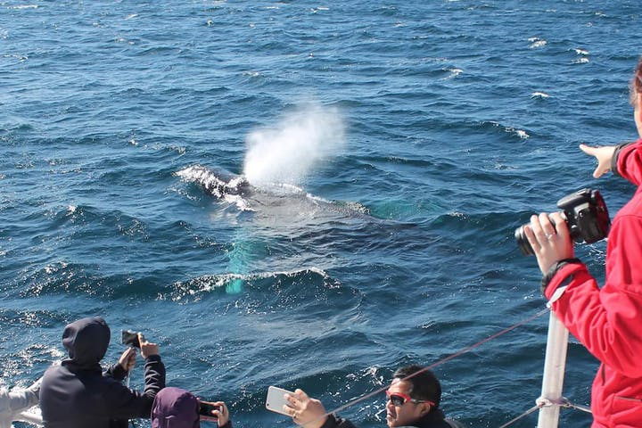 Sydney-Fantasea-Whale-Watching-Cruise