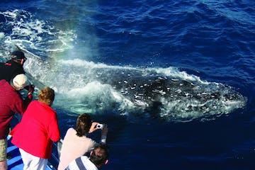 Palm-Beach-Australia-Whale-Watching-Cruise