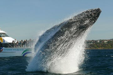 2hr Explorer Cruise, Whale Watching
