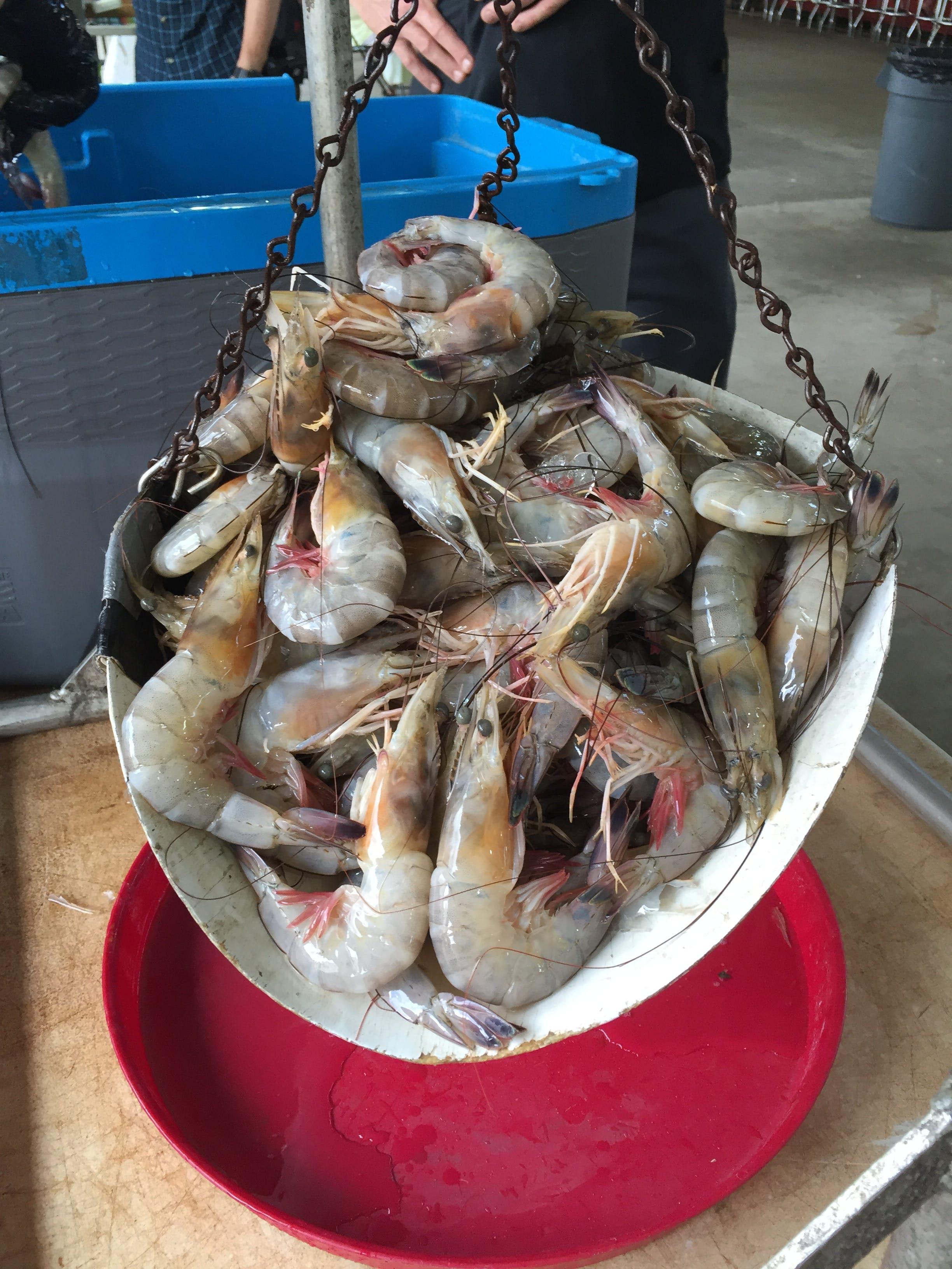 Shrimp Market
