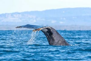 a whale swimming in a body of water