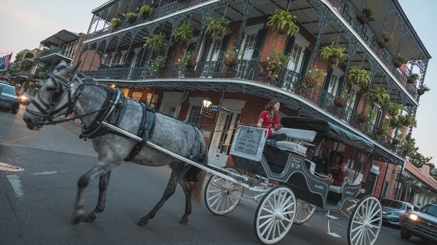 Horse and Carriage New Orleans