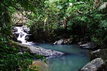 El Yunque National Forest creek with water flowing down into a pool