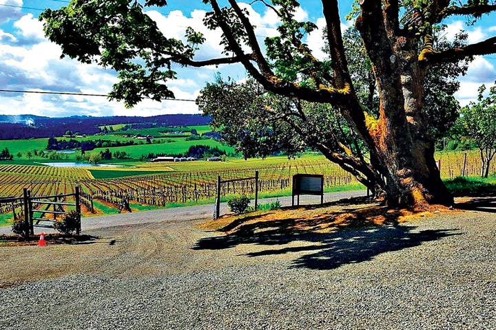 Vineyard in Oregon open for private tours