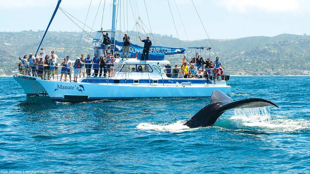 Humpback whale on Dolphin and Whale Watch
