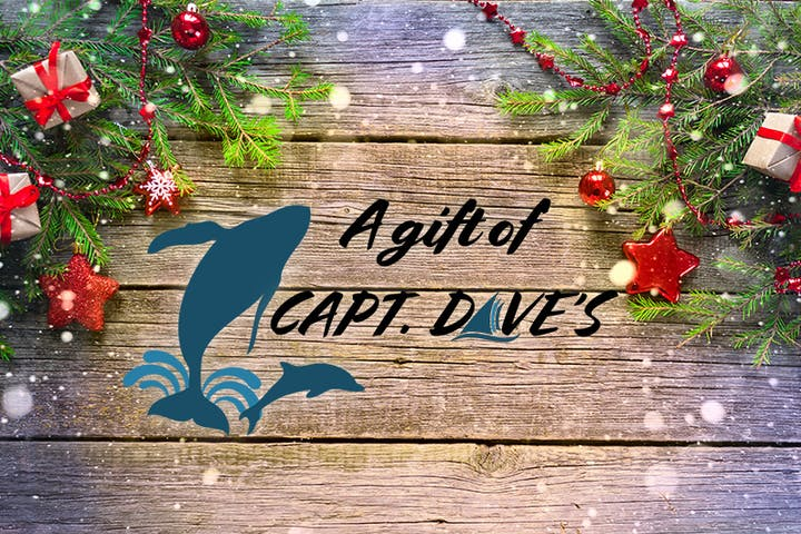 Christmas Gift Card for Whale Watching