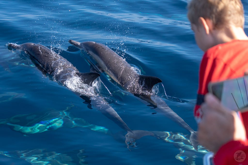 Child having fun with bow riding dolphins