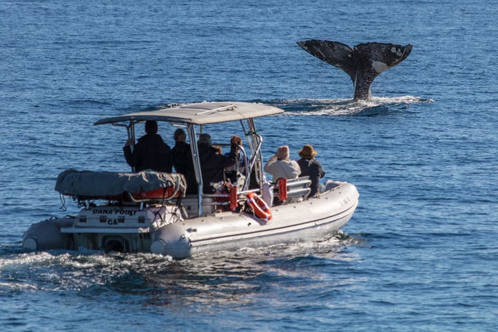 People on zodiac whale watching tour viewing a gray whale tail