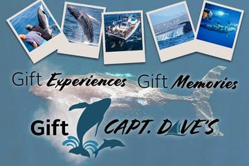 Whale Watching Gift Certificate