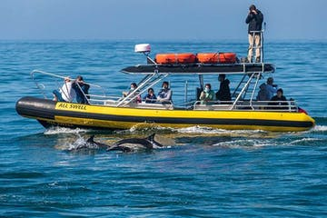 Dolphins swim next to zodiac boat called AllsWell