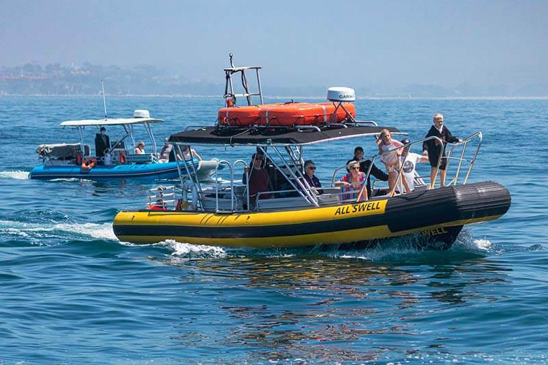 Our fleet of rigid inflatable (zodiac-style) boats