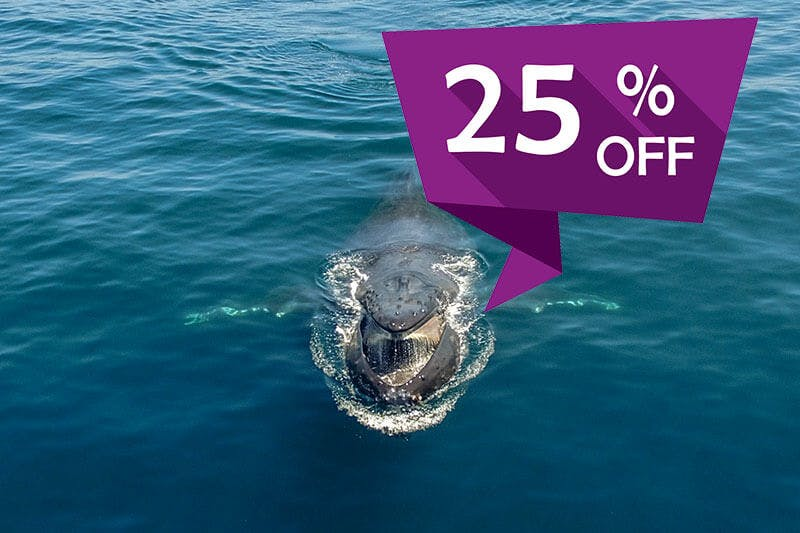 A humpback whale with mouth open and sign for 25% whale watching discount