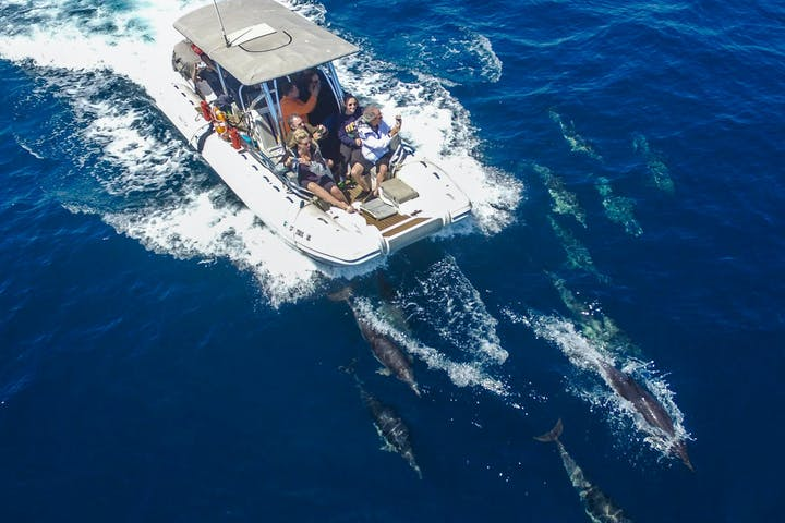 Dolphins below the boat