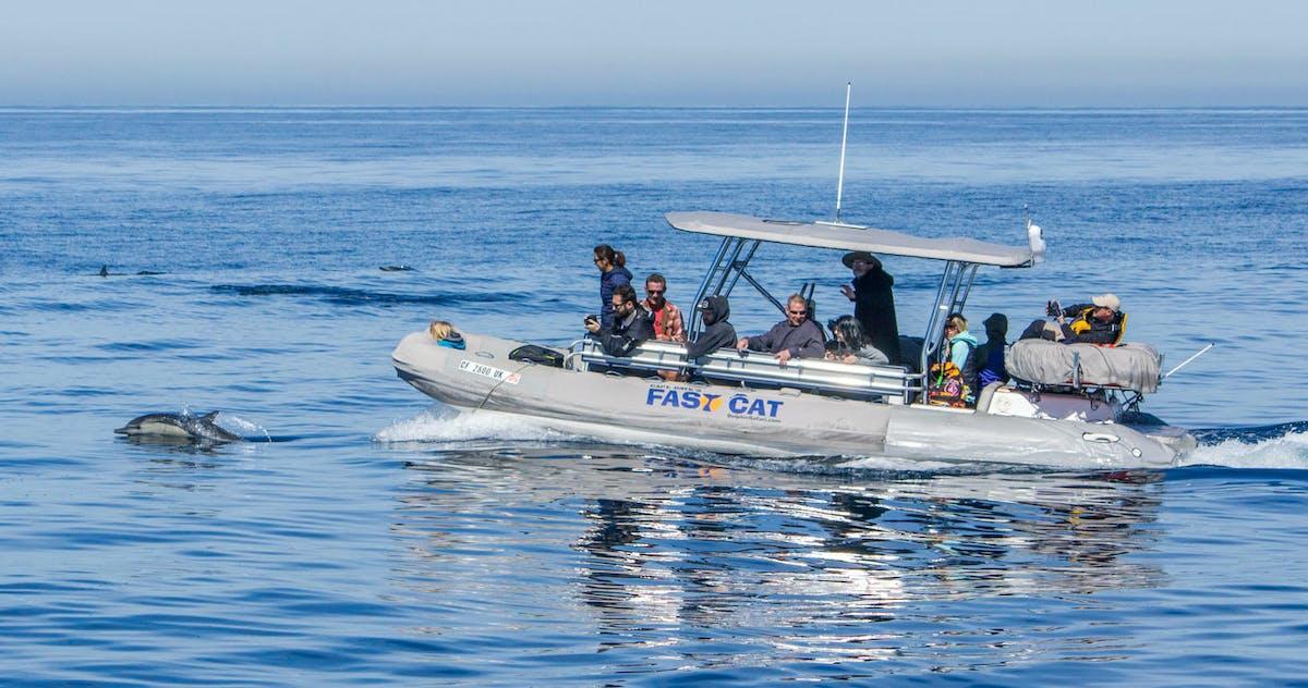 fast cat zodiac charter