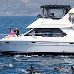 ORCA Boat Captain Dave's Dolphin Safari