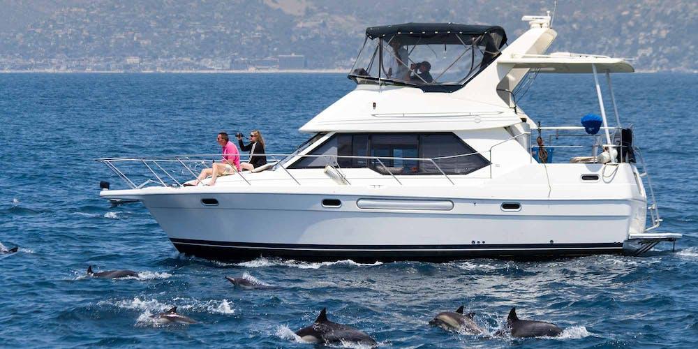 Motor Yacht ORCA Captain Dave's Dolphin Safari