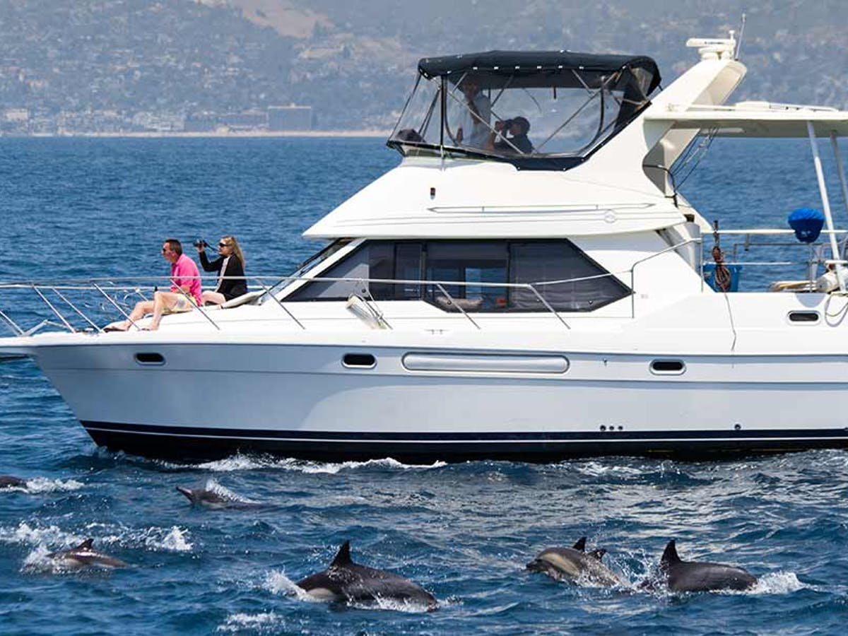 Capt. Dave's Luxury Motor Yacht ORCA