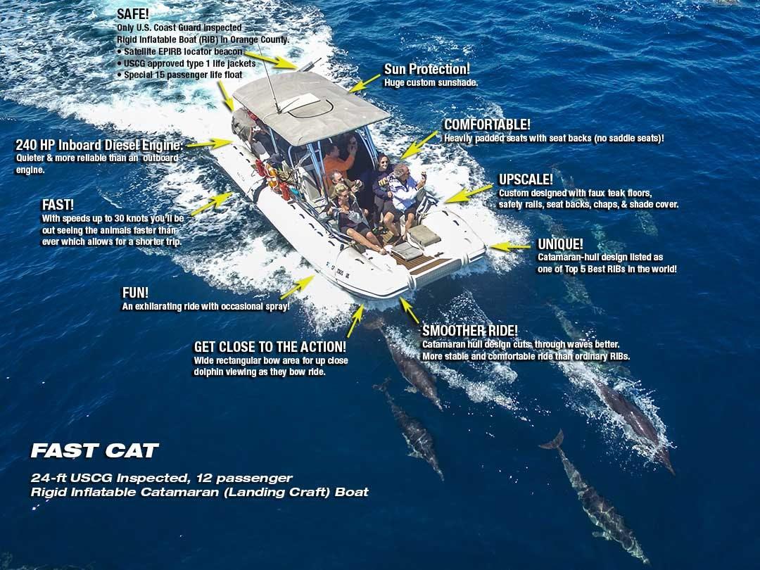 Fast Cat informational diagram