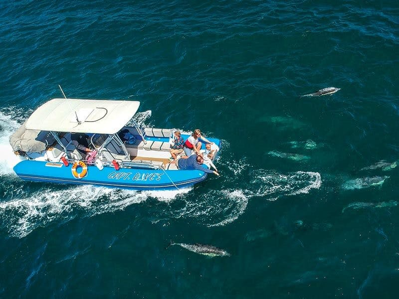Zodiac whale watching cruise with dolphins at fingertips
