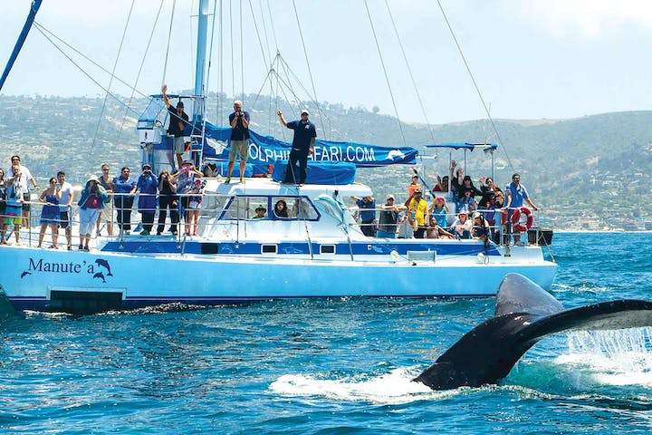 Whale watching catamaran sailboat Manute'a with humpback whale fluke