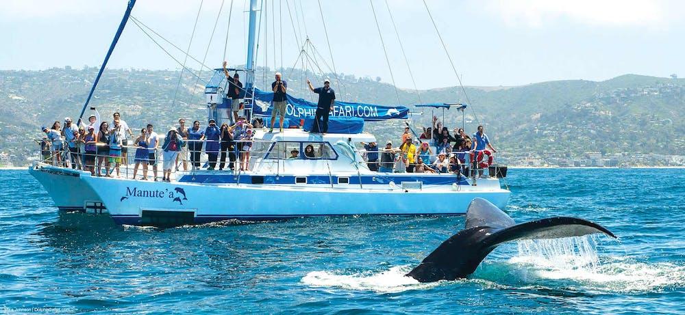 Whale watching catamaran sailboat Manute'a with humpback whale fluke