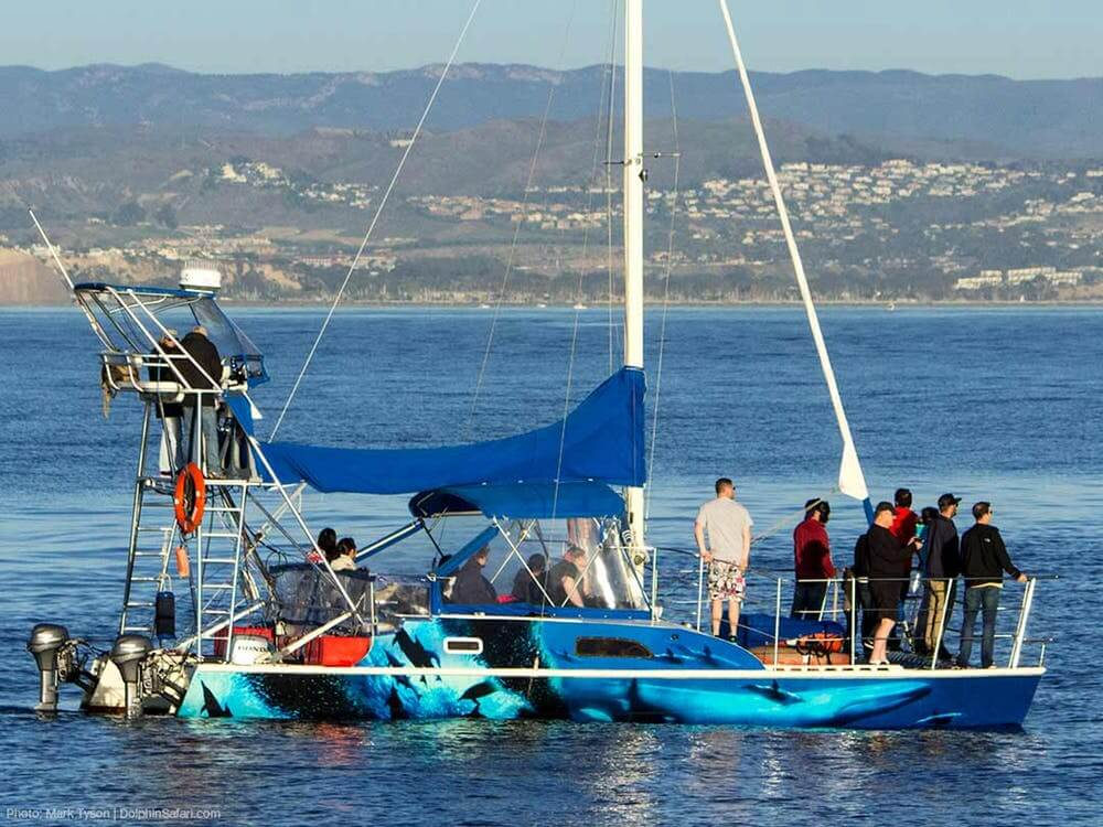 A Group of People Stand on a Whale Watching Catamaran