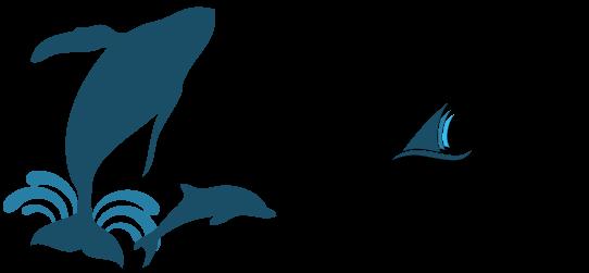 capt. daves dolphin & whale safari coupon