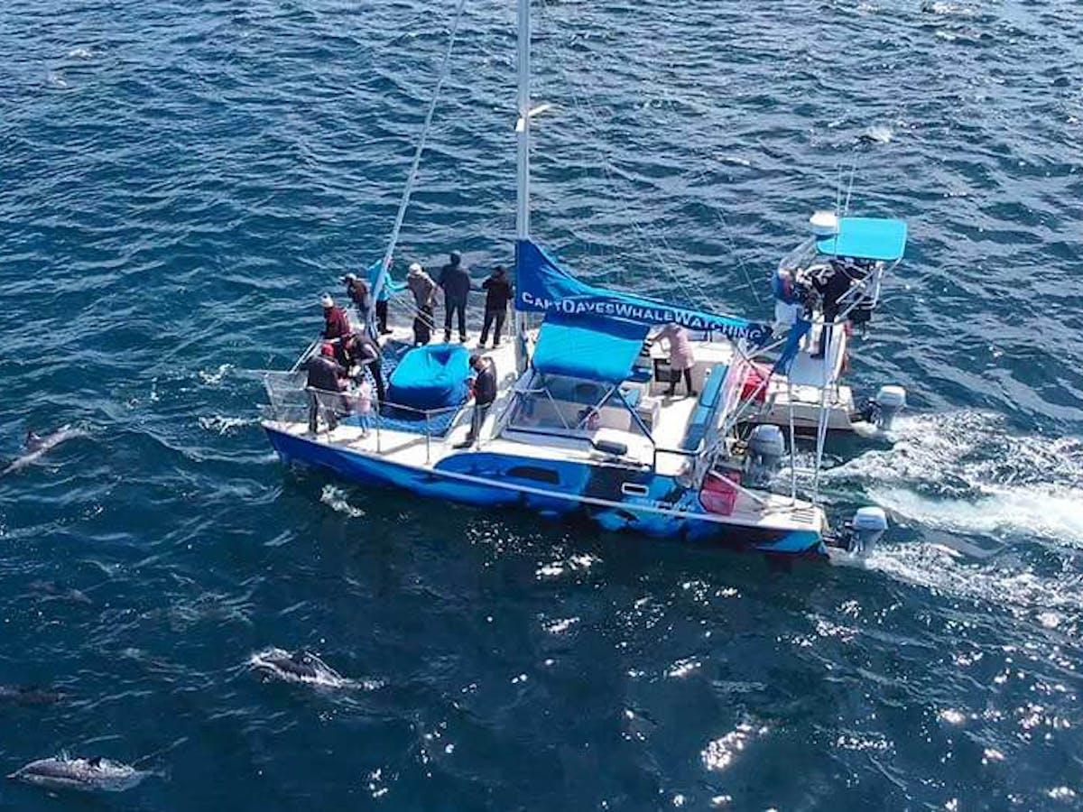Dolphins surround Capt. Dave's whale watching catamaran DolphinSafari