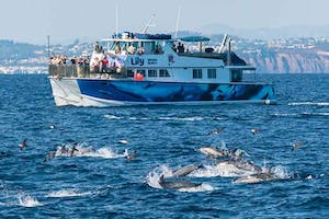 Upscale whale watching catamaran Lily surrounded by dolphins in front of Dana Point